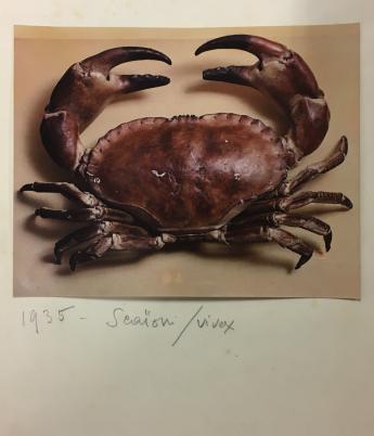 Nature morte au crabe, par Egidio Scaioni © Egidio Scaioni / Paris Musées, Palais Galliera